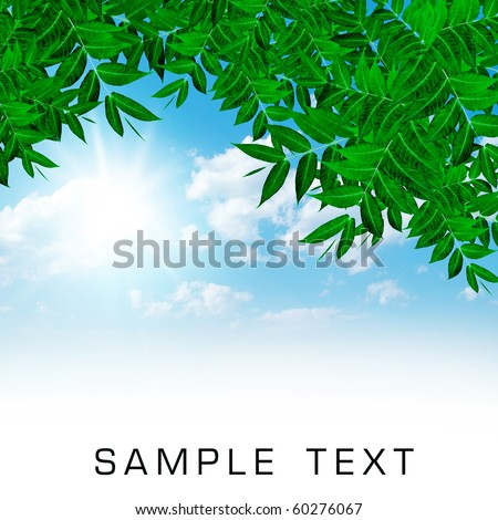 foliage on blue sky background - stock photo