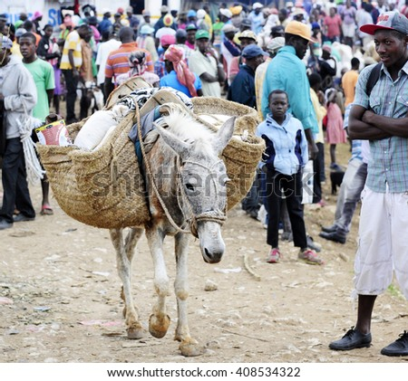 FOND BAPTISTE, HAITI - FEBRUARY 18, 2016:   A long donkey walking from the crowded market in Fond Baptiste with his side packs loaded with goods. - stock photo