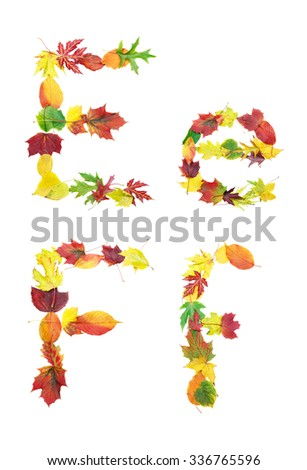Font made of autumn leaves isolated on white. Letters e and f. - stock photo