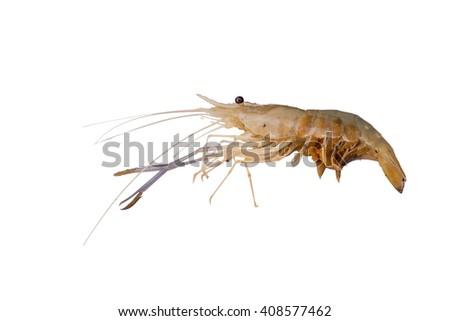food:crayfish,shrimp - stock photo