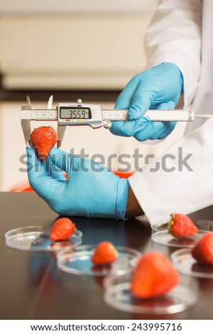 Food scientist measuring a strawberry at the university - stock photo