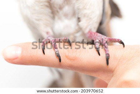 foot dove on white background - stock photo
