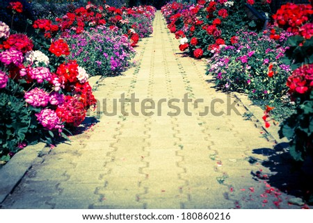 Foot path in garden,vintage style color. - stock photo
