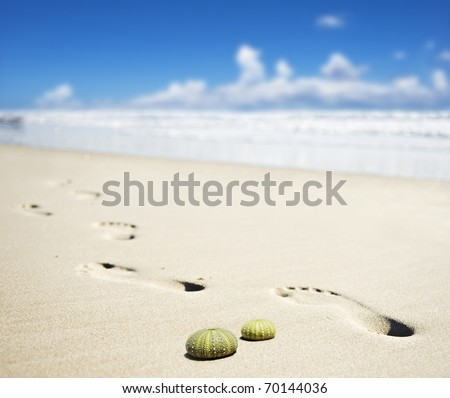 Foot prints on a sandy beach with the focus on the empty shells of two sea urchins - stock photo