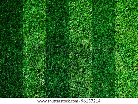 football grass - stock photo