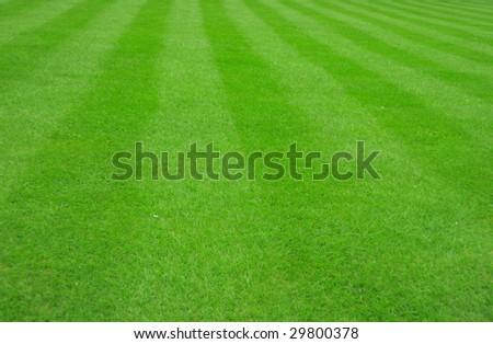 football grass background - stock photo
