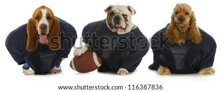 football team - - stock photo
