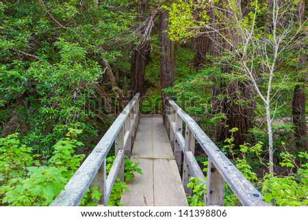 Footbridge in forest, Big Sur, California - stock photo