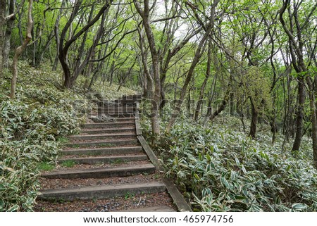 Footpath along the Eoseungsangak Trail next to the Hallasan Mountain on Jeju Island in South Korea.