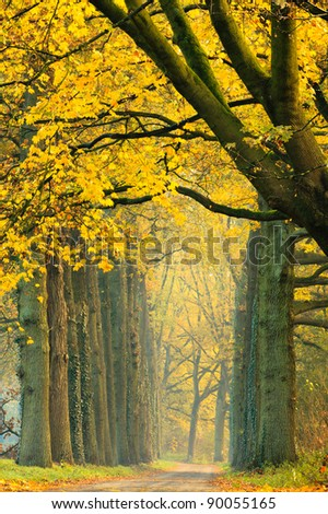 Footpath along trees in forest with autumn colors