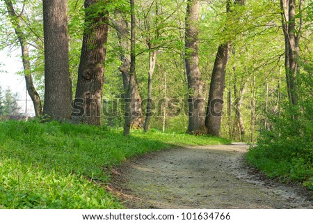 Footpath among the huge oaks. A beautiful spring landscape - stock photo