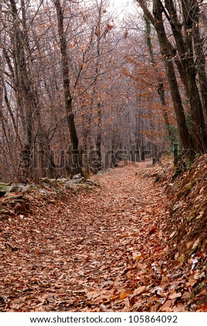 Footpath covered with leaves into the woods in late winter