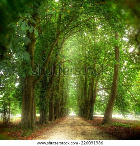 Footpath flanked by trees - stock photo