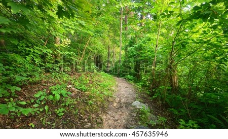 Footpath in a deciduous forest - stock photo