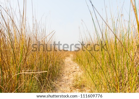 footpath in dry grass field in the afternoon - stock photo