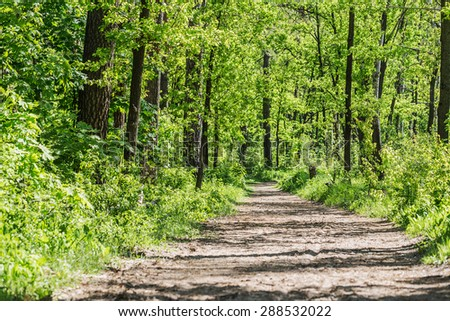 Footpath in summer green forest