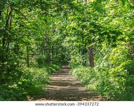 Footpath in summer green forest - stock photo