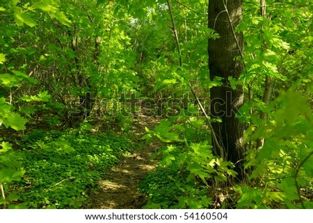 Footpath in the green forest - stock photo