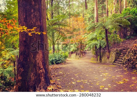 Footpath intersection in a tropical forest in Fall, Melbourne, Australia. - stock photo