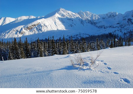 Footpath on fresh snow in Gasienicowa valley of High Tatras - stock photo