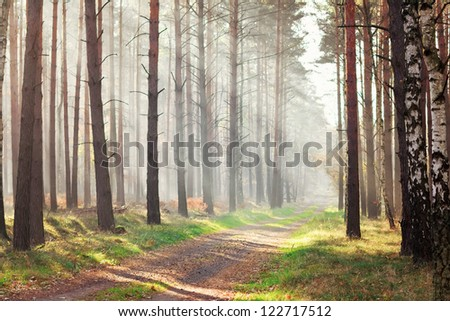 Footpath through a beautiful sun autumn forest - stock photo