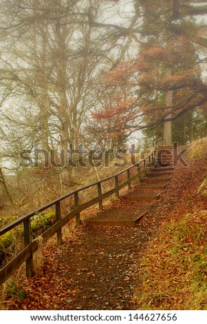 Footpath through a forest on a misty autumn day