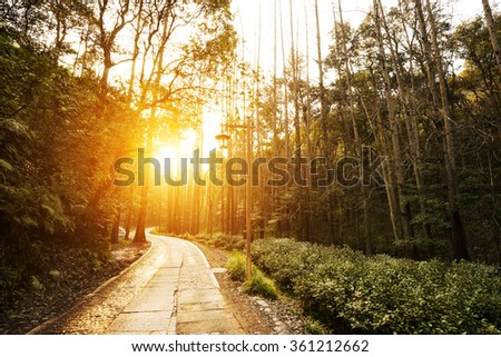 footpath through forest with sunbeam - stock photo
