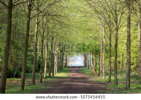 Footpath through Green Forest of Beech Trees in Spring