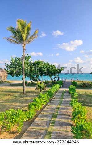 Footpath to the sea with palm trees. - stock photo
