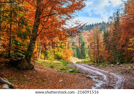 Footpath winding through colorful forest in Transylvania-Romania - stock photo