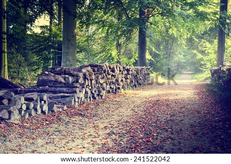 Footpath with log piles on the side in autumn forest  - stock photo