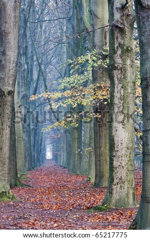 Footpath with majestic Beeches in autumn - stock photo