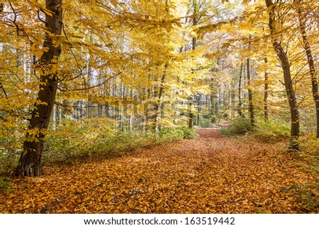 footpath with the colors yellow autumn forest - stock photo
