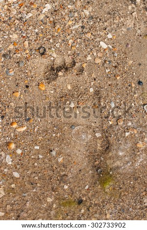 footprint in the sand with shells washed by the waves - stock photo