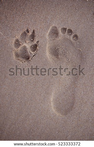 Footprint of person and dog on the beach, playing on the beach w