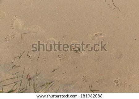 footprint sand close up texture - stock photo