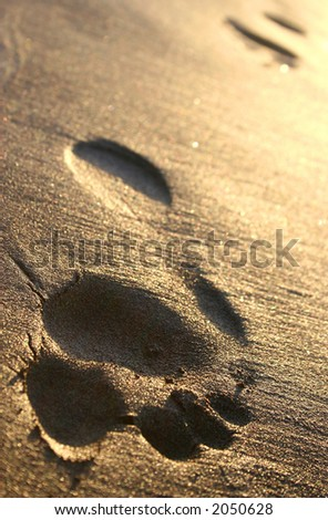 Footprint trail in golden sand at sunset