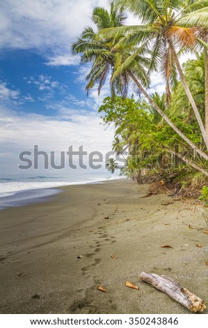 Footprints disappearing into the distance on a sunlit  palm fringed tropical beach, Osa Peninsula, Costa Rica - stock photo