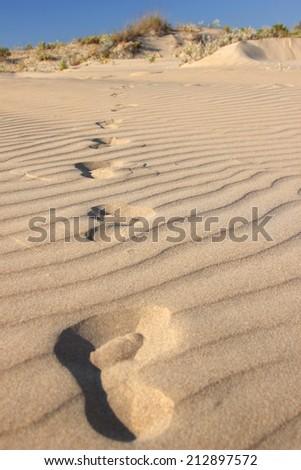Footprints in a desert - stock photo