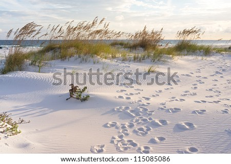 Footprints in the sand at sunset in the dunes of Pensacola Beach, Florida. - stock photo