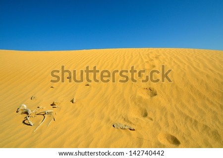 Footprints on the sand in the desert - stock photo