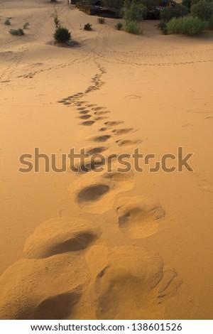 Footsteps in the dunes Footsteps in the dunes of the Erg Chebbi desert (Morocco)  - stock photo