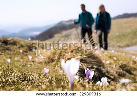 foreground flowers with hikers walking in the background - stock photo