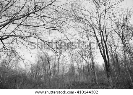 Forest after a bushfire, black and white background - stock photo