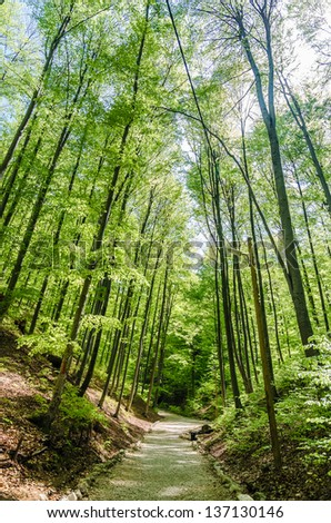 Forest Alley In The Carpathian Mountains - stock photo