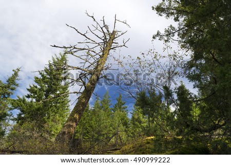 Forest and clouds by Shuswap Lake, British Columbia, Canada