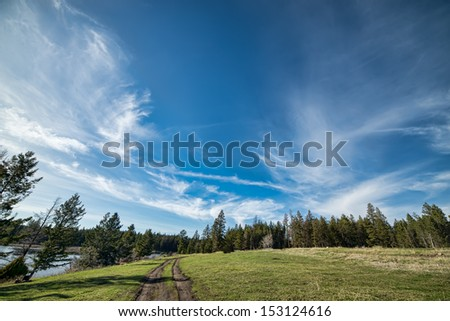 Forest and dirt road with blue whispy clouds in the sky. - stock photo