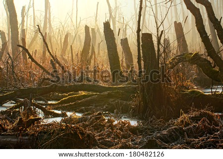 Forest and marsh - stock photo