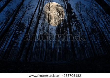 forest and moon - stock photo