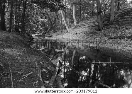 Forest and the river (black and white) - stock photo